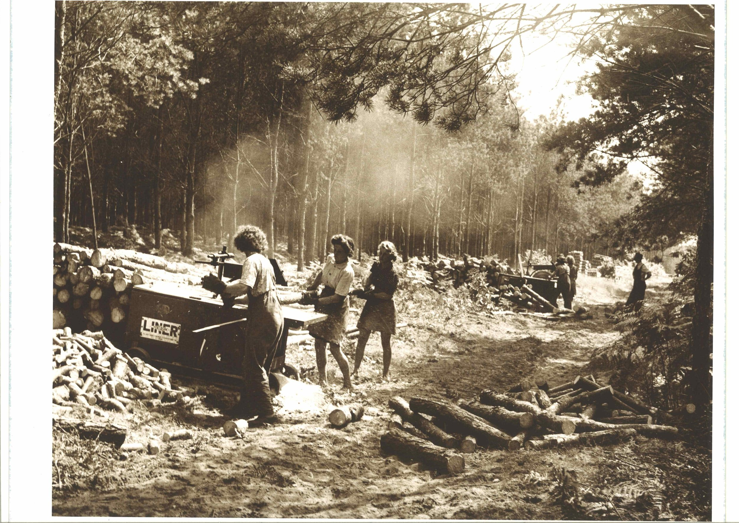 Members of the Women's Timber Corps at work