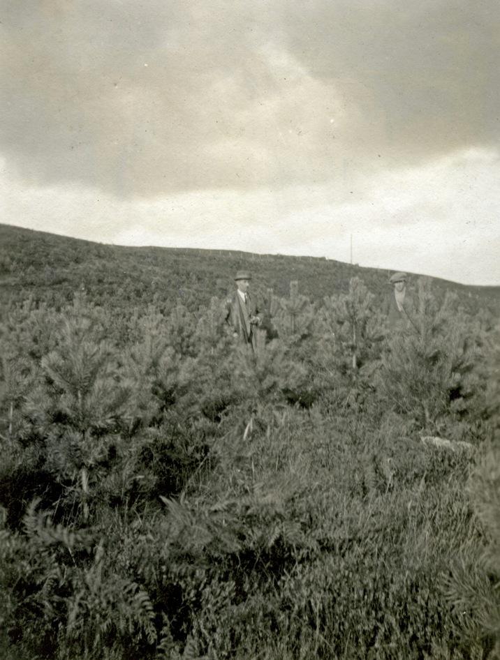 Inchnacardoch plantings, 1926