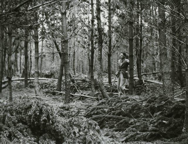 Culbin research plot, 1943
