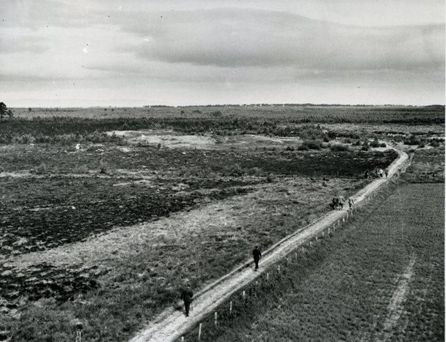 Walking into Culbin, 1943