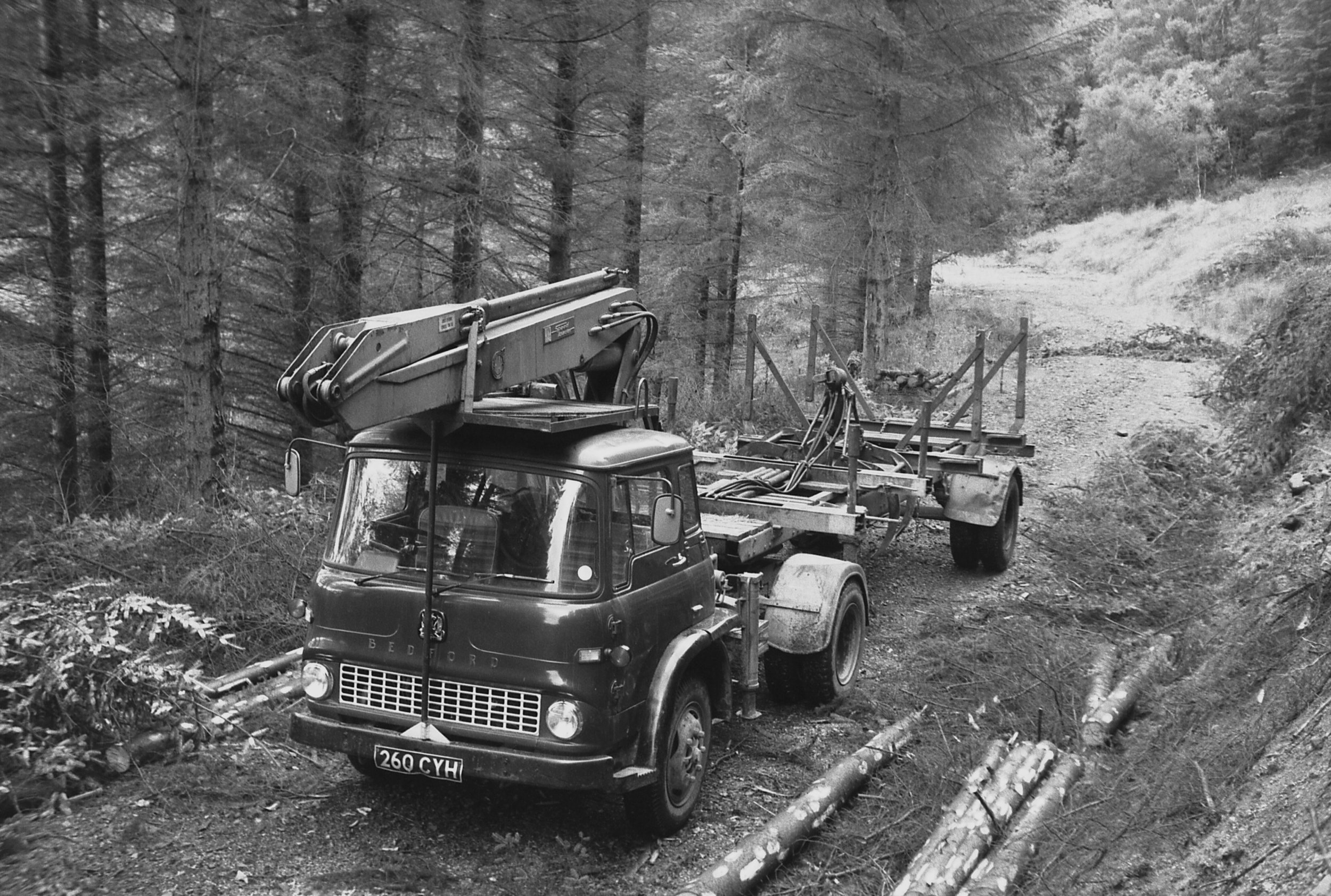 Can you help us fill up the    100 year timeline of forestry in Scotland   ?