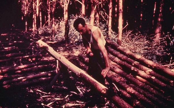 Hand-peeling timber, 1950