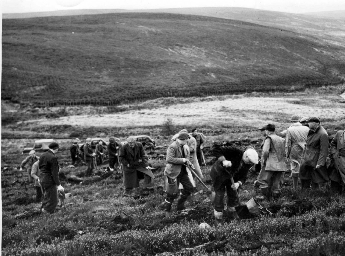 Planting squad, Fetterresso Forest, 1952