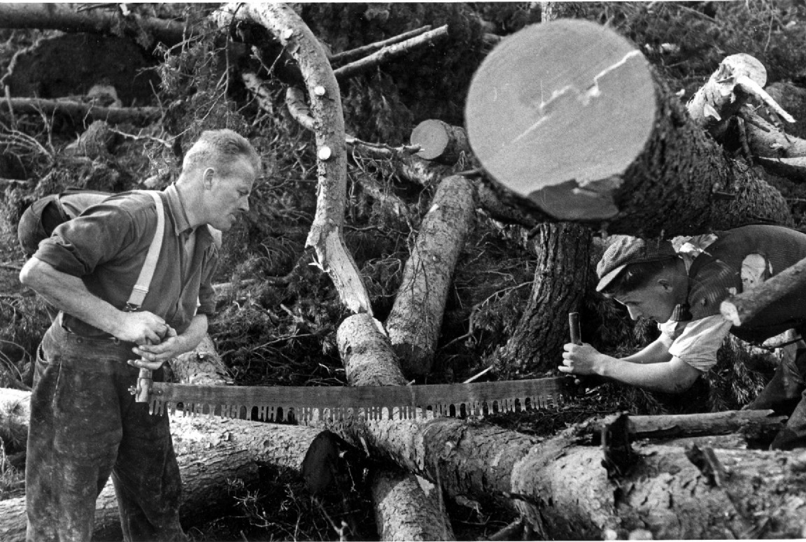 Clearing windblown trees, Deeside, 1952