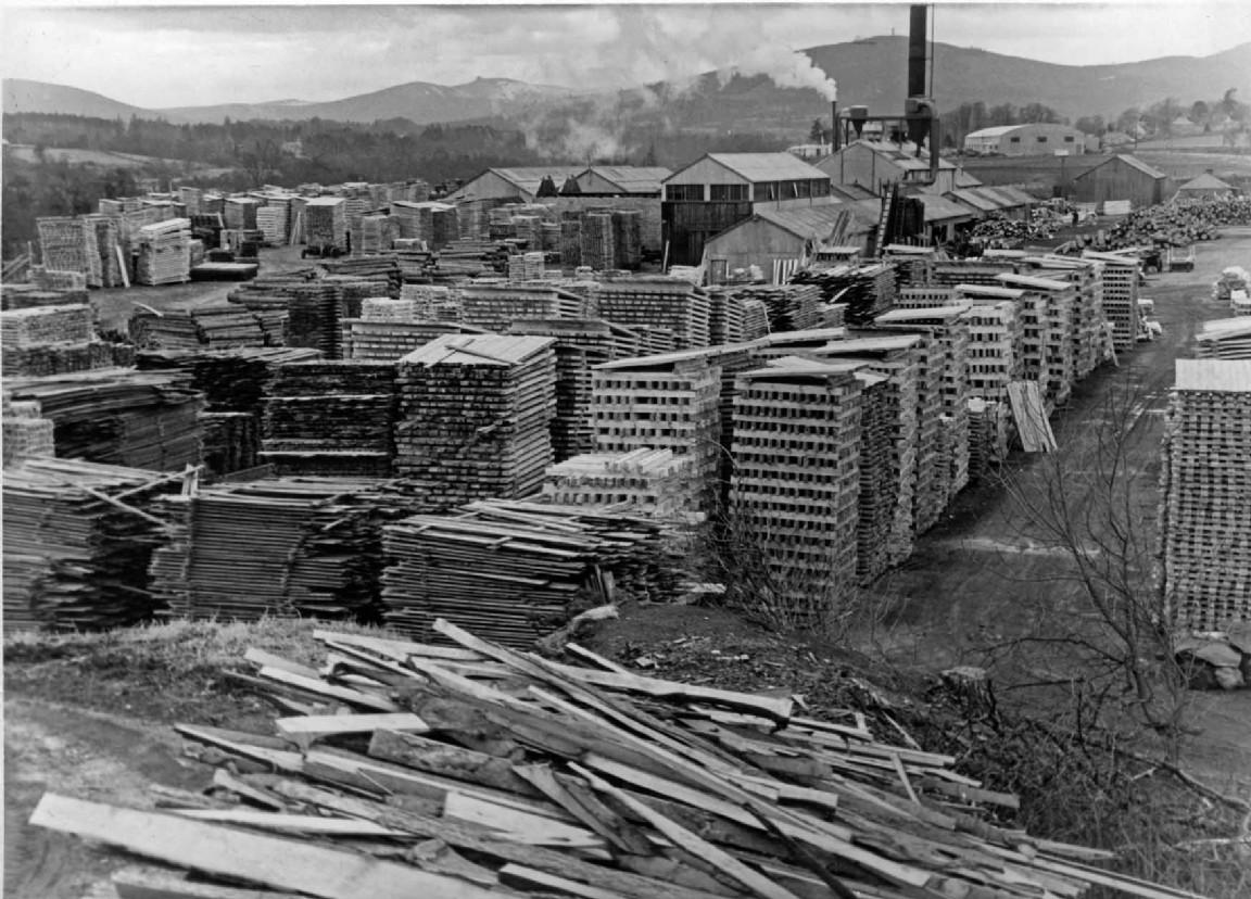 Silverbanks Sawmill processing windblown timber, 1954