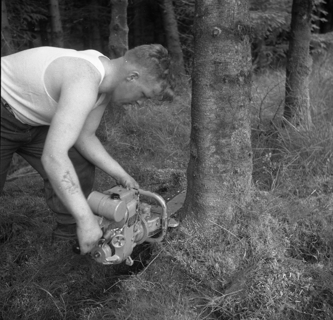 Early chainsaw, 1956