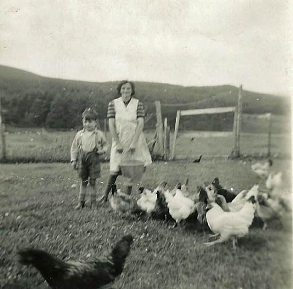 Chickens, Bin Forest, 1954