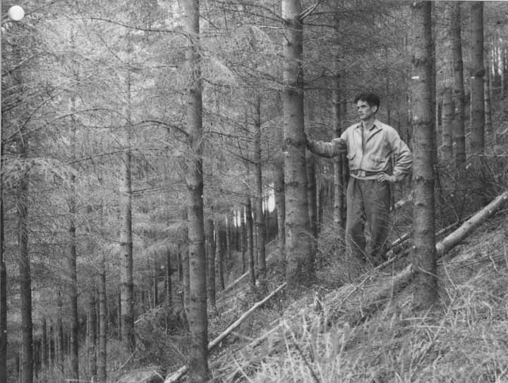 Portclair forest, 1949