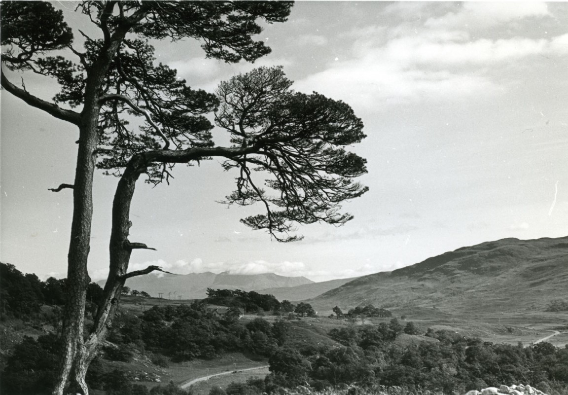 Polloch to Glenhurich forest road, 1967