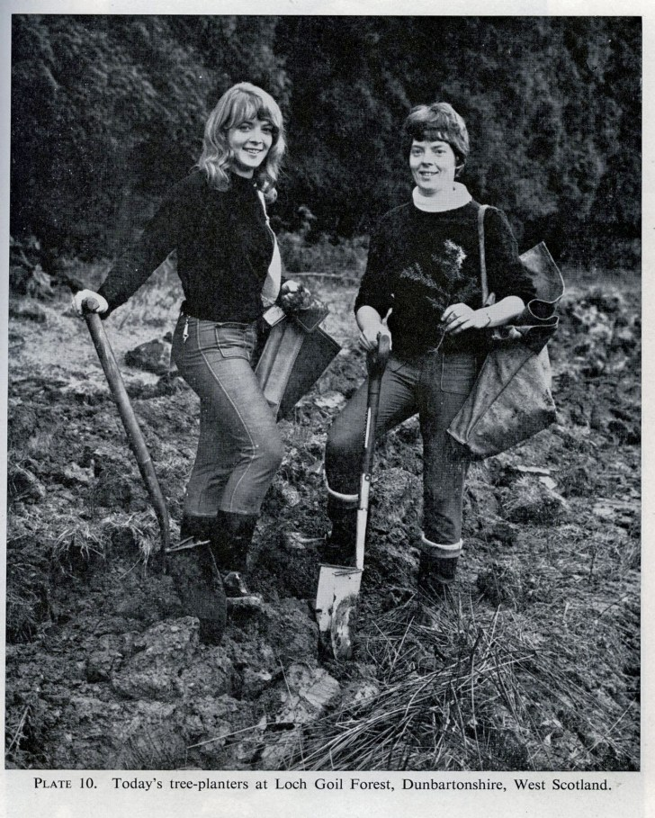 Newspaper clipping, tree planting at Loch Goil, 1968