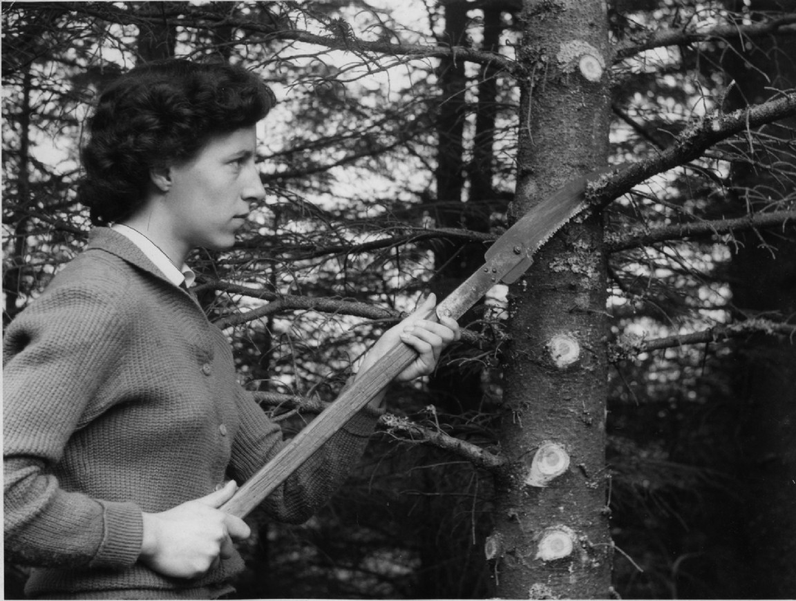 Brashing trees at Inerlieven, 1960