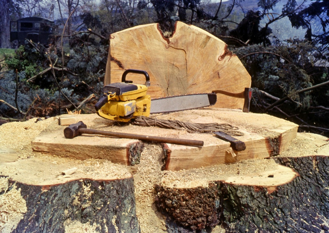 1963_Large felled tree.jpg