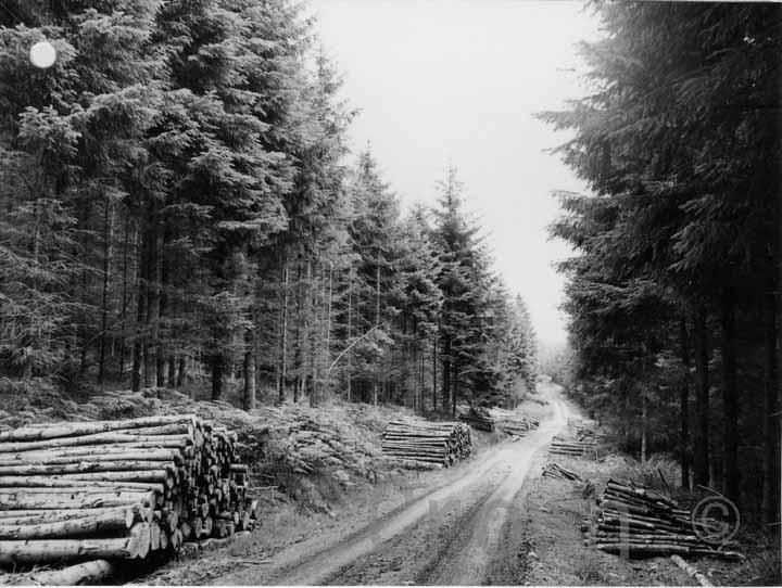 Cardrona, near Peebles, 1971