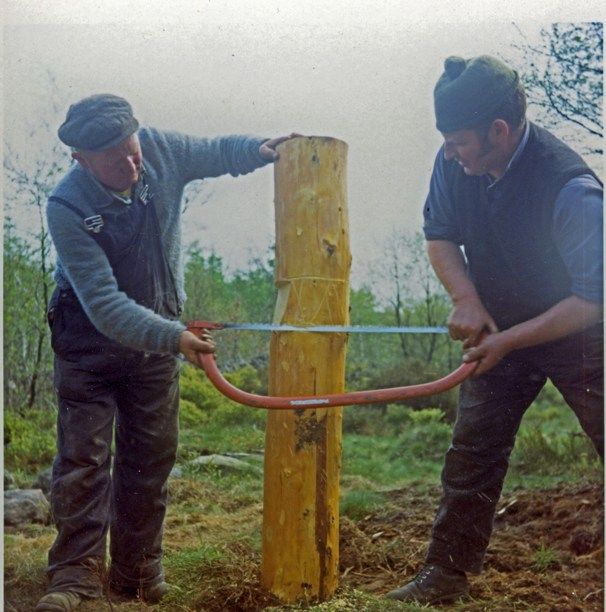 Sawing a fence post, Kirkhill Forest, 1973