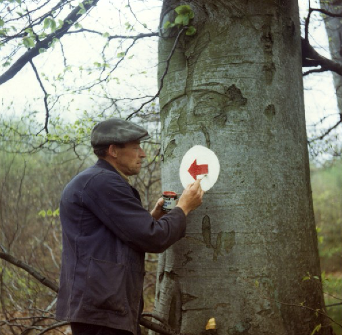Signage in Kirkhill Forest, 1973
