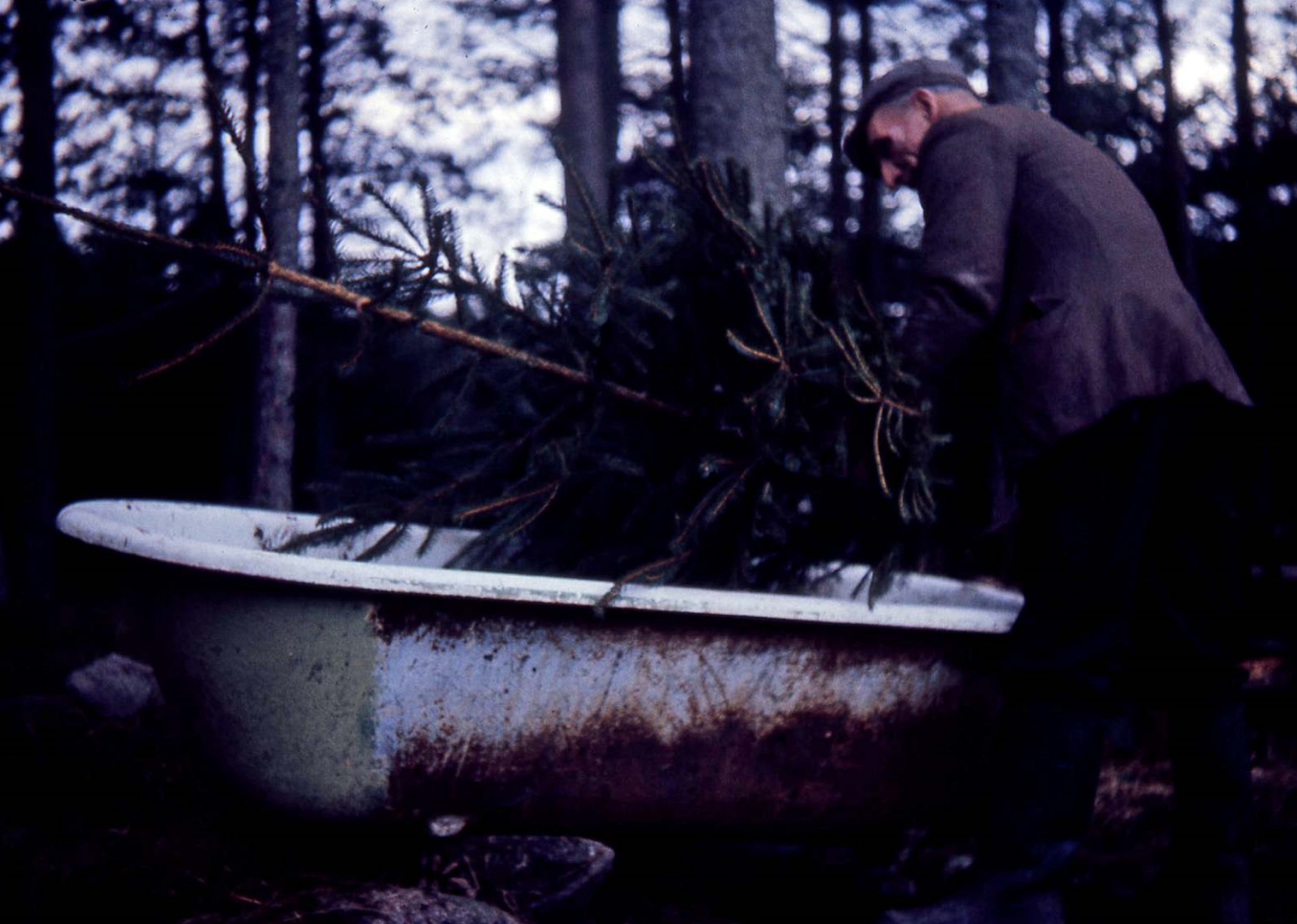 Christmas tree bath, 1971