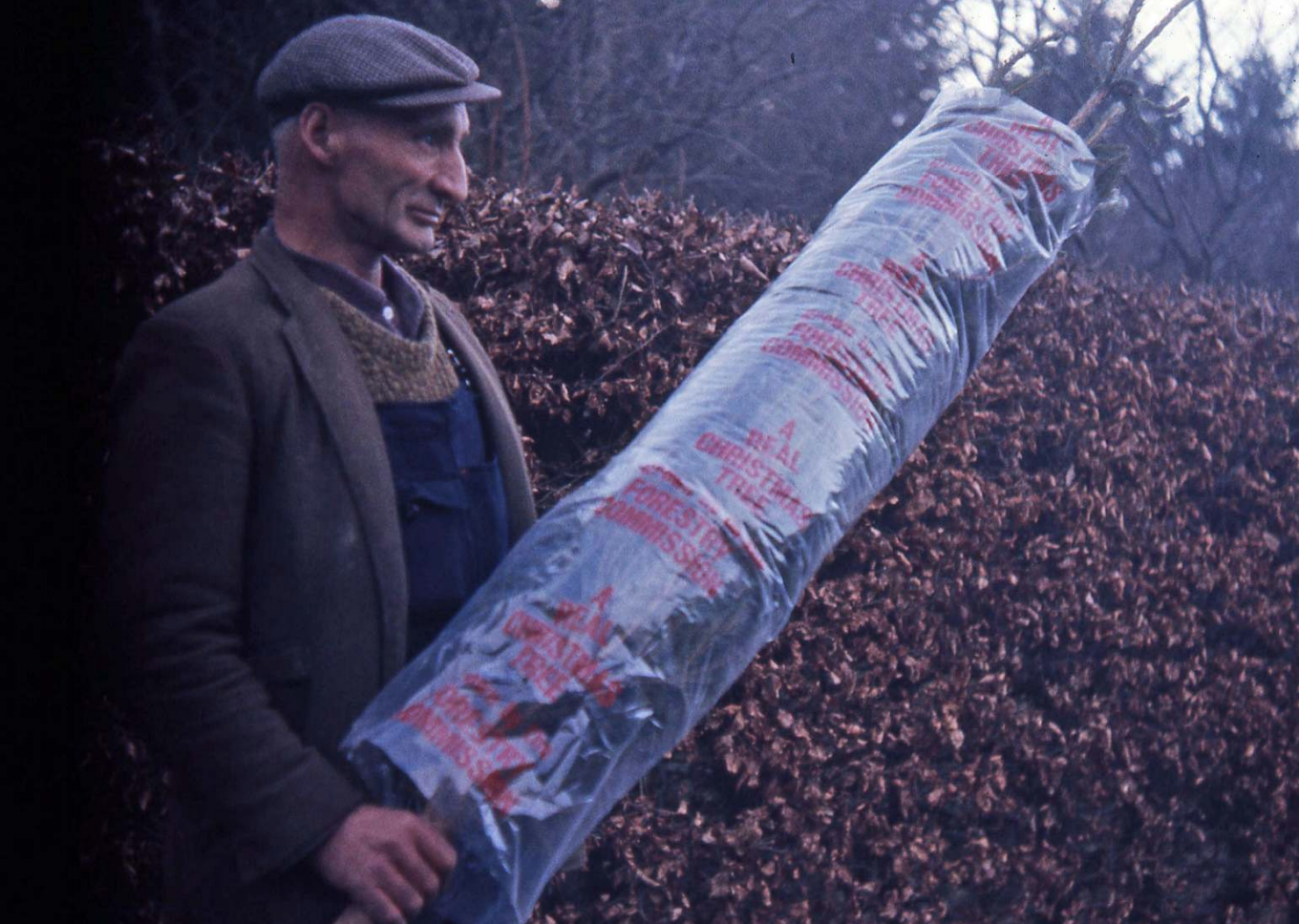 Forest worker with Christmas tree, 1971