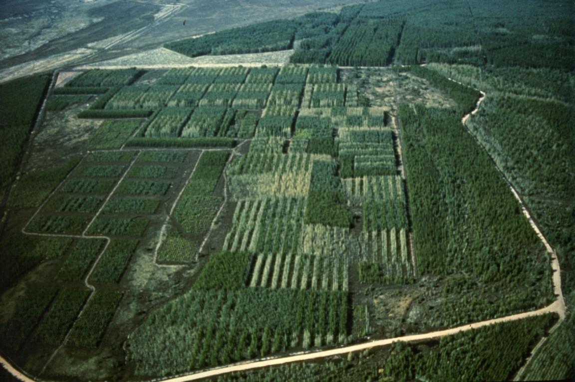 Forest Research plot, Tiendland, 1981