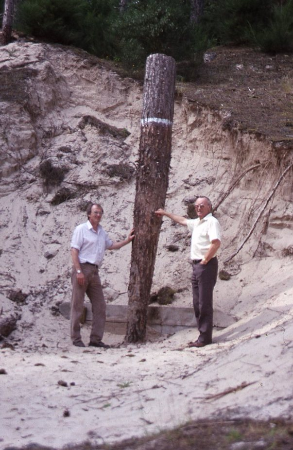 1990_Buried pine.jpg