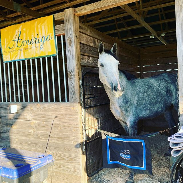 Happy and Ian (Ian wasn't feeling like posing - too busy eating) are settled in at War Horse. Happy is doing her first BN horse trial and Ian and I are running the Prix St Georges test on Sunday. #sanddsncingottb #amerigo #ottb #royaltyhappenswe