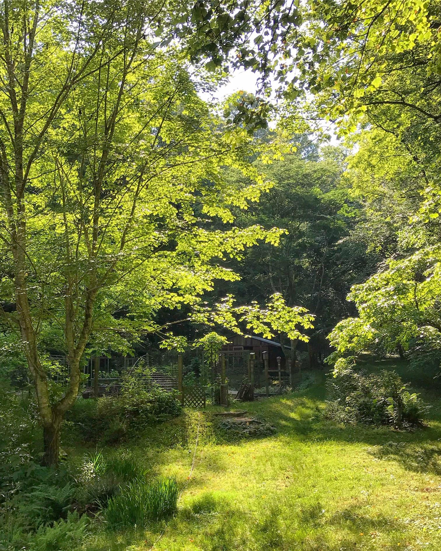 Garden Sun .jpg