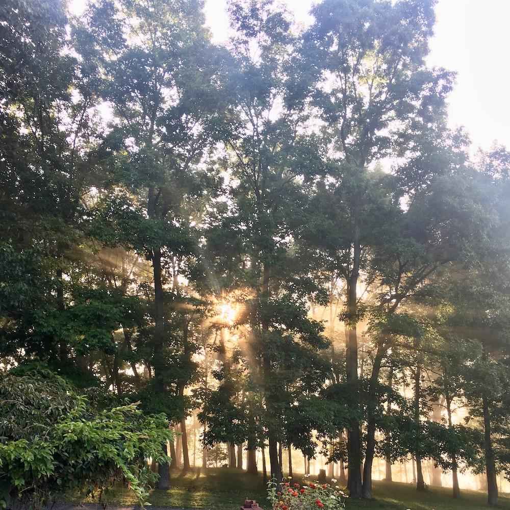 Sunlight through trees.jpeg
