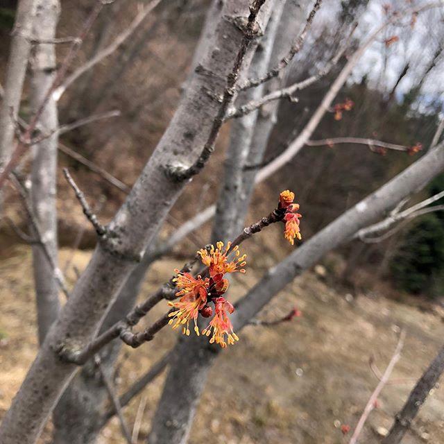 Petits bourgeons deviendront grands! Le printemps est la saison idéale pour nous visiter et constater l'ampleur de votre futur chez-vous, à-travers les branches bientôt fleuries et débordantes de vie!