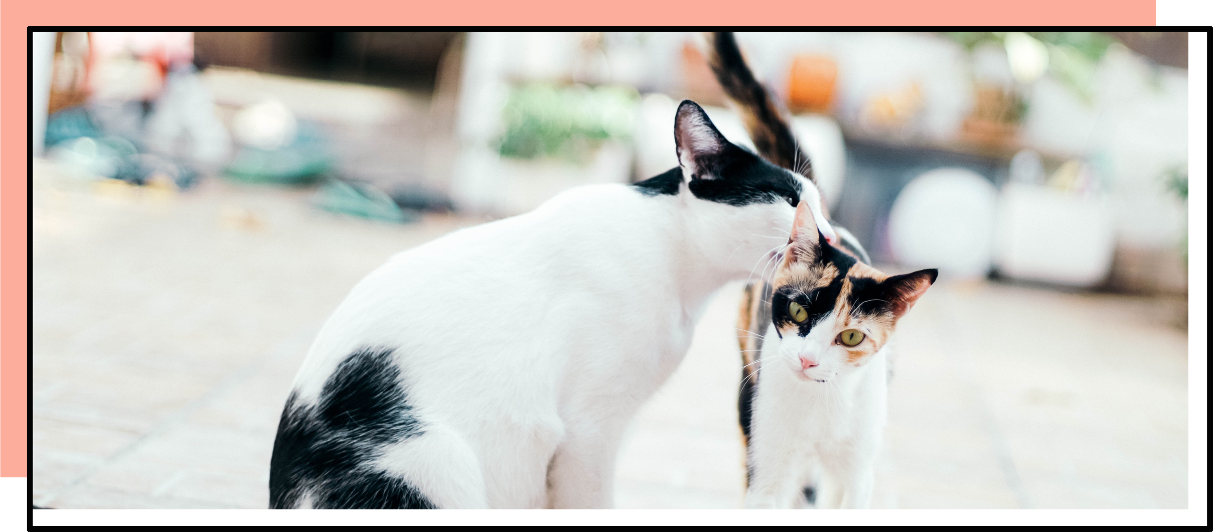 paige.banner.cats.png