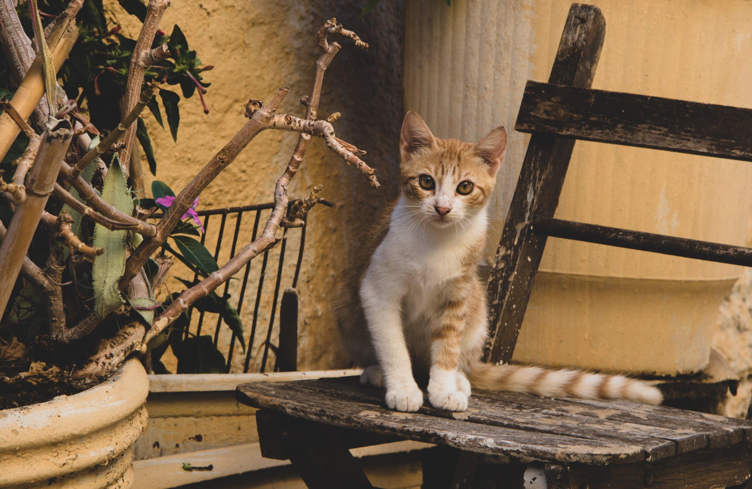 outside cat, kitten on chair #kitten #outsidekitten