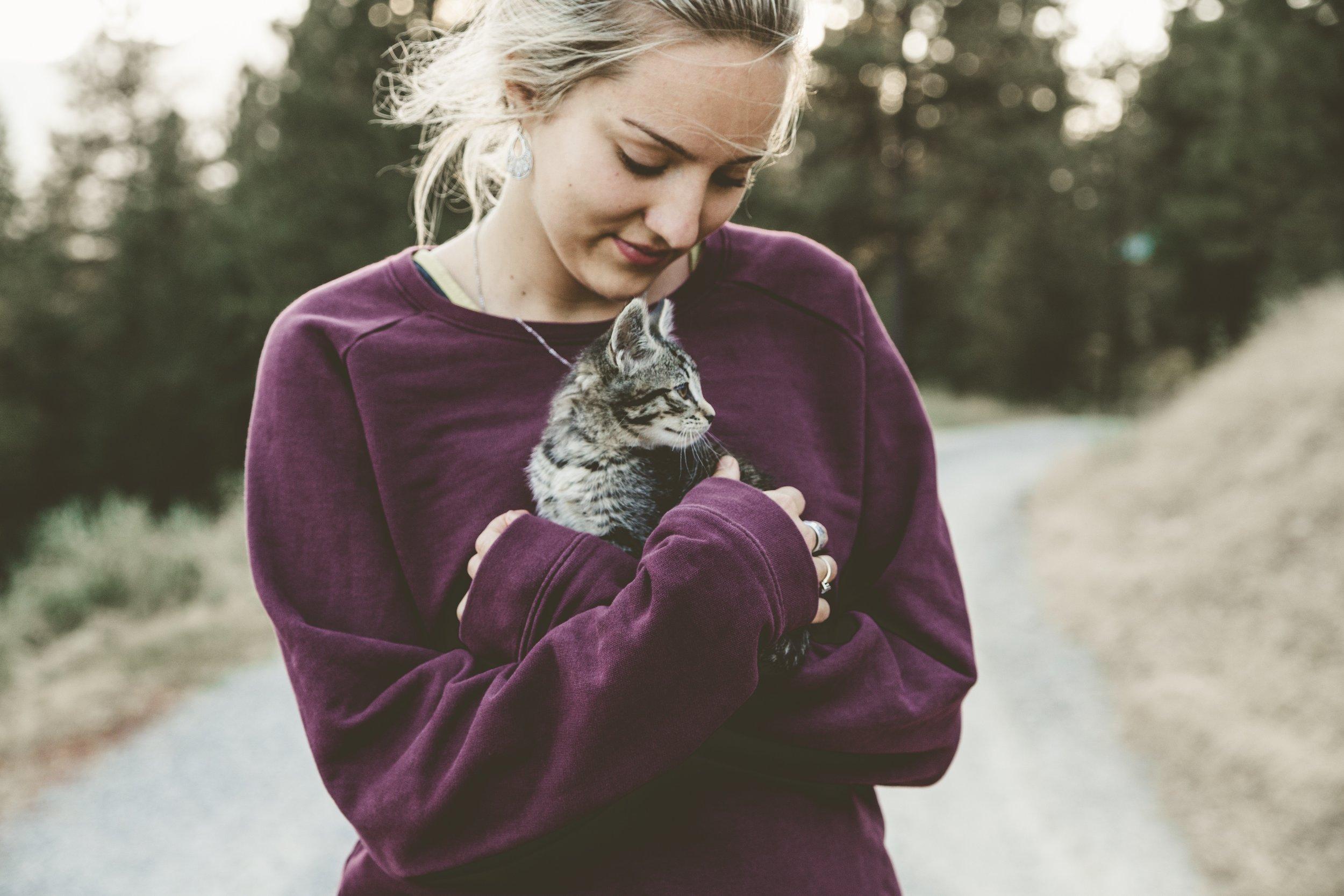 Kitten Cuddles, #kittencuddles #graykitten