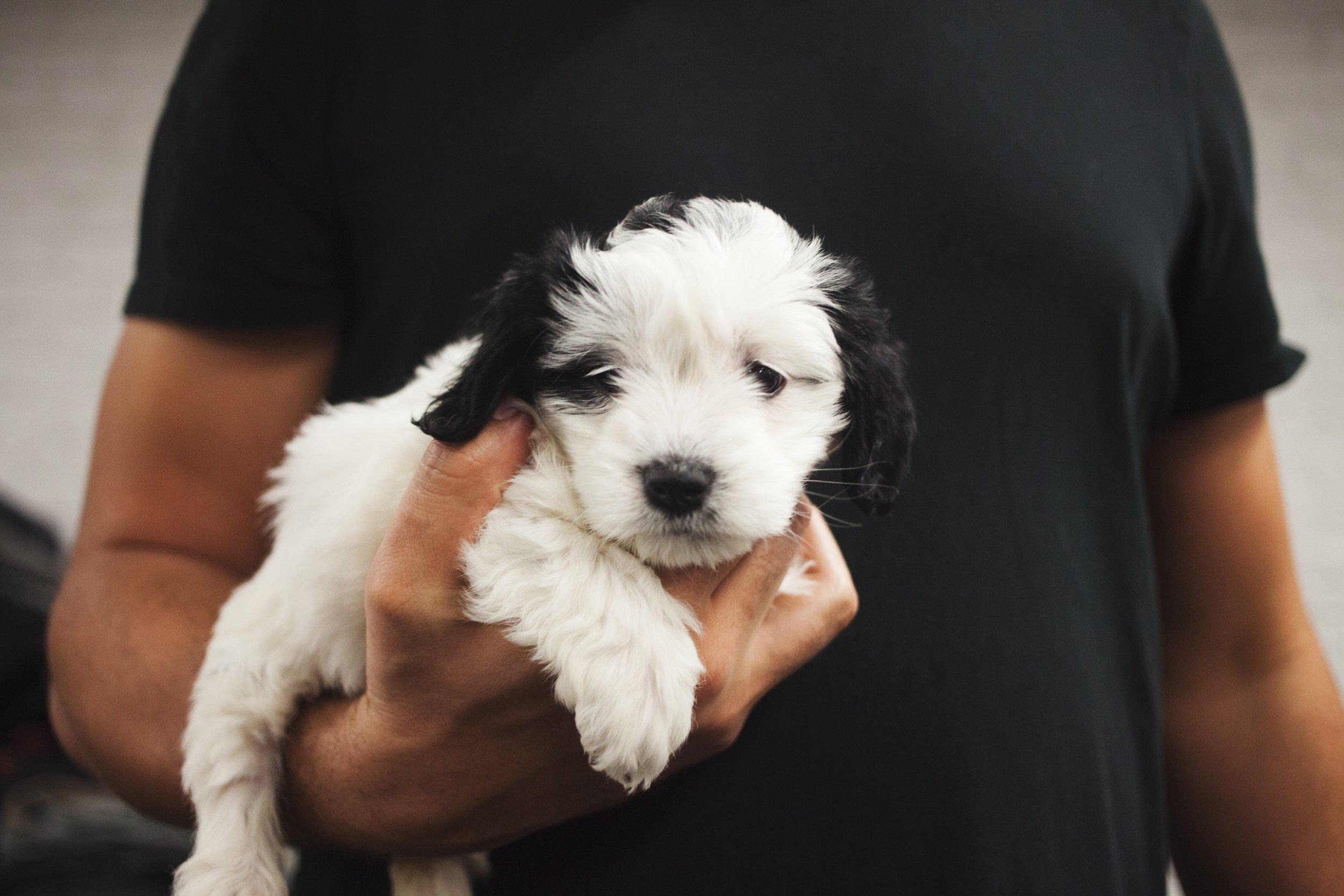 Puppies are man's best friend #puppylove #tinypuppy