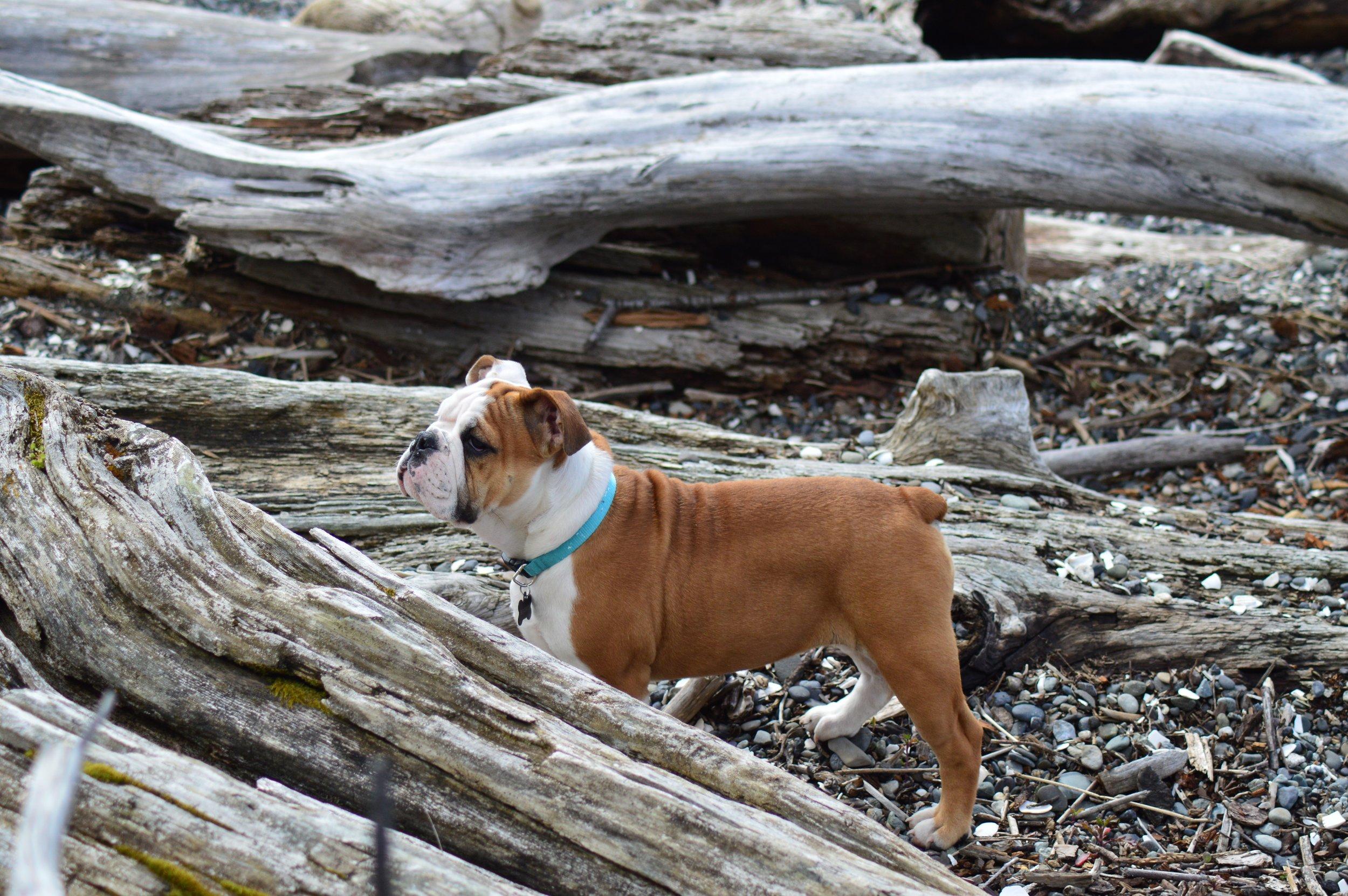 Outside Dog, Dog in Nature #dognature #outsidepuppy