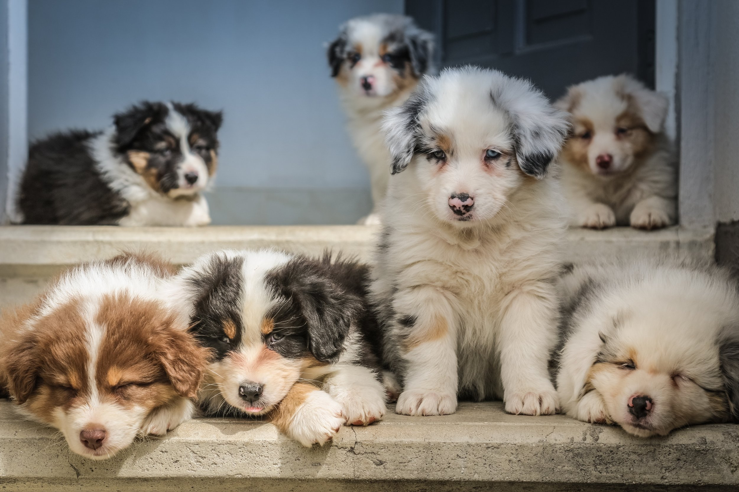 Load of Puppies, groups of puppies, #puppyadoption #puppylover
