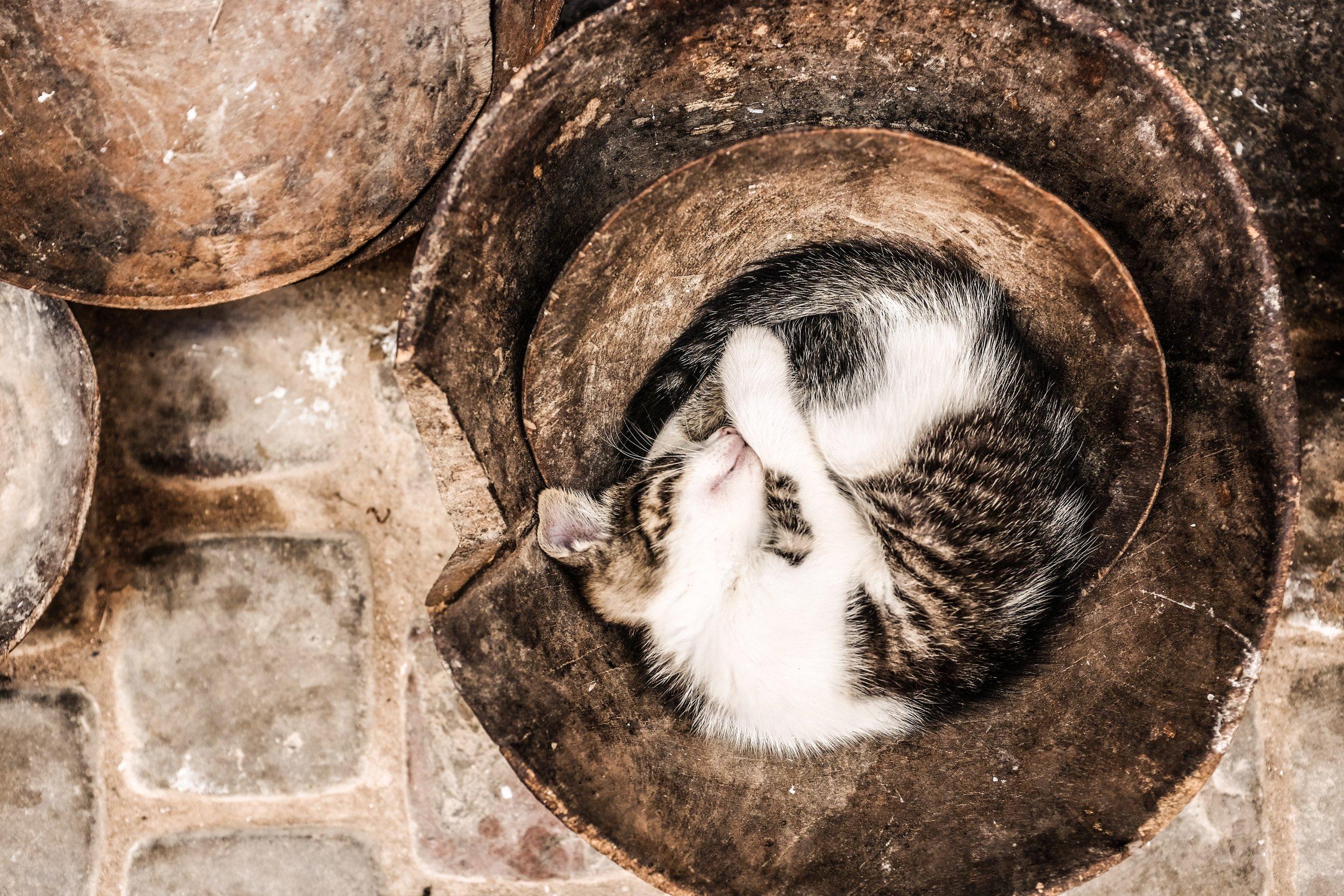 Sleepy Kitty #sleepingcat #sleepykitty #cutesleepingcat
