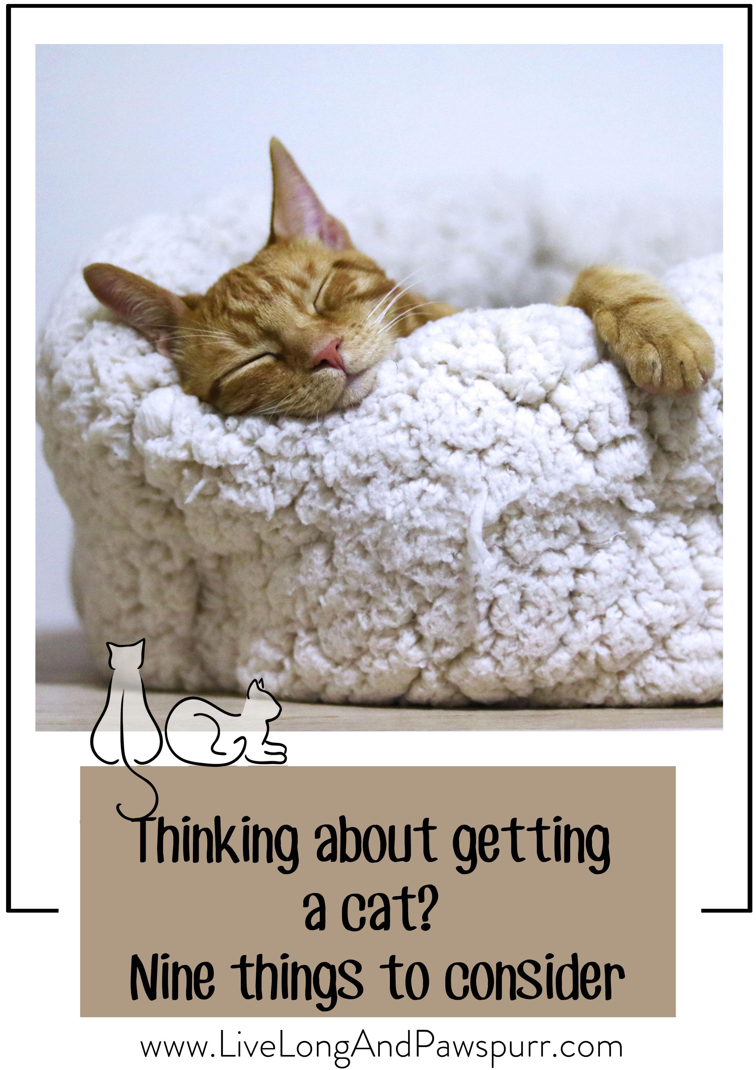 kitten adoption, helpful tips, #kittenadoption #kittentips