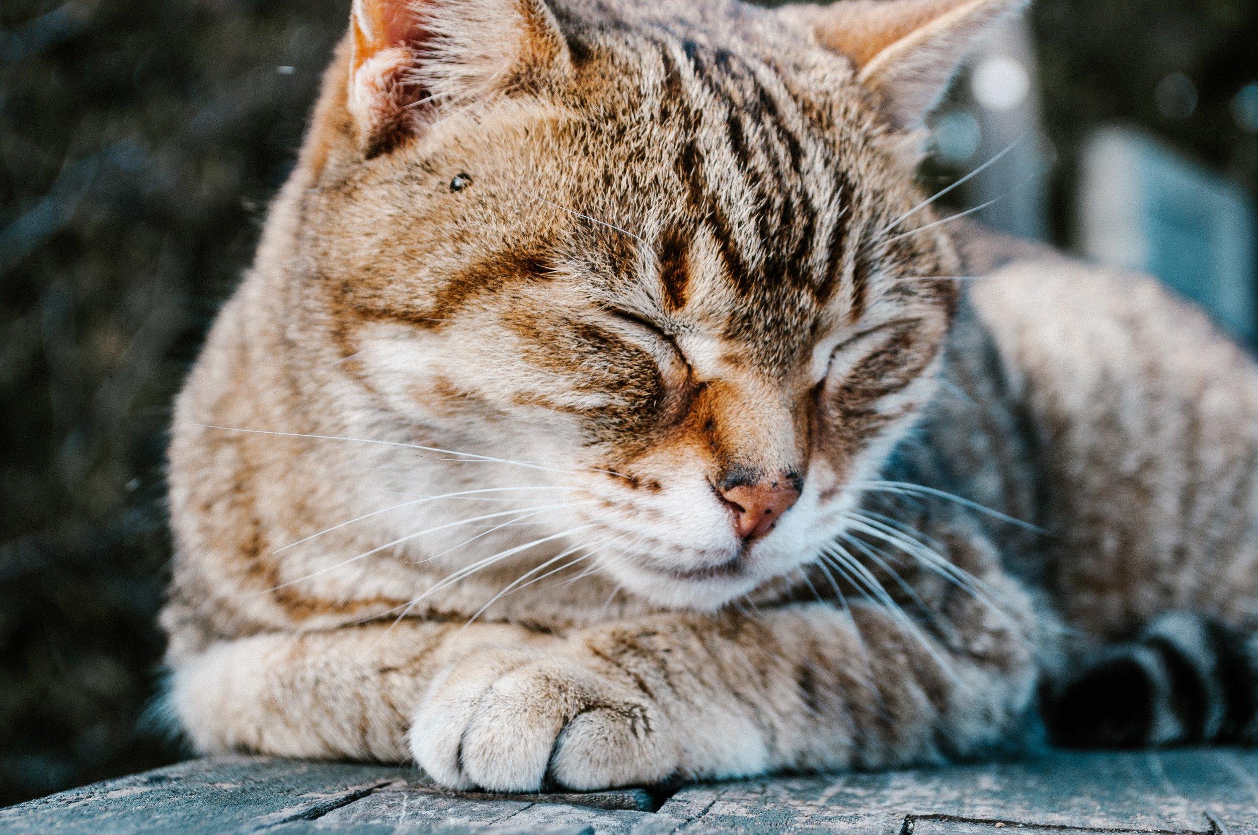 male cats male kittens #malekittens #malecats