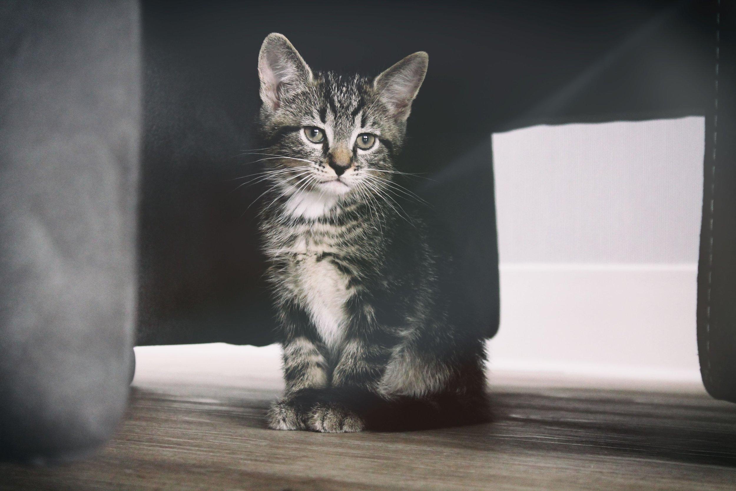 male kitten males cats female kittens female cats #femalecats #malecats