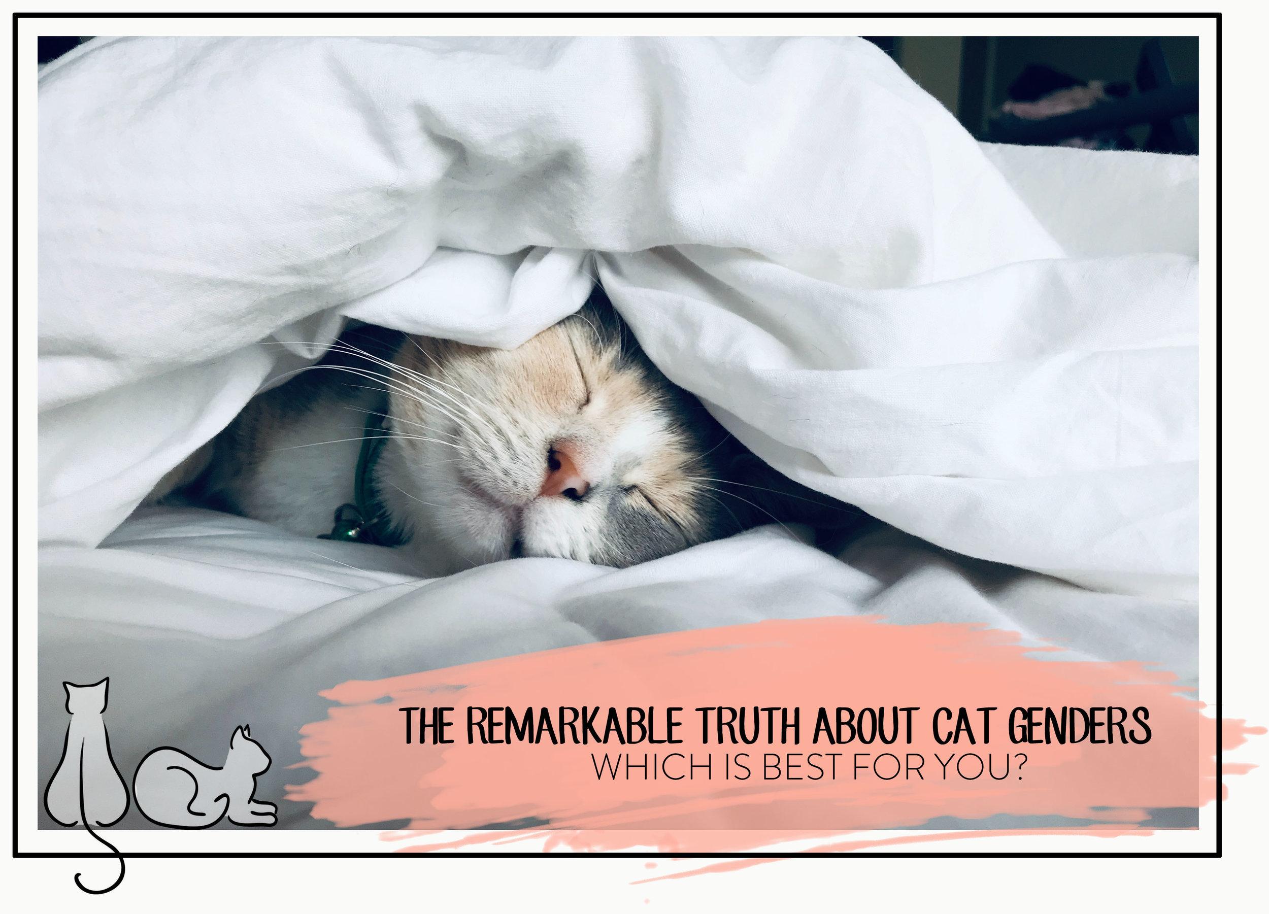 CAT GENDERS HEADER.jpg