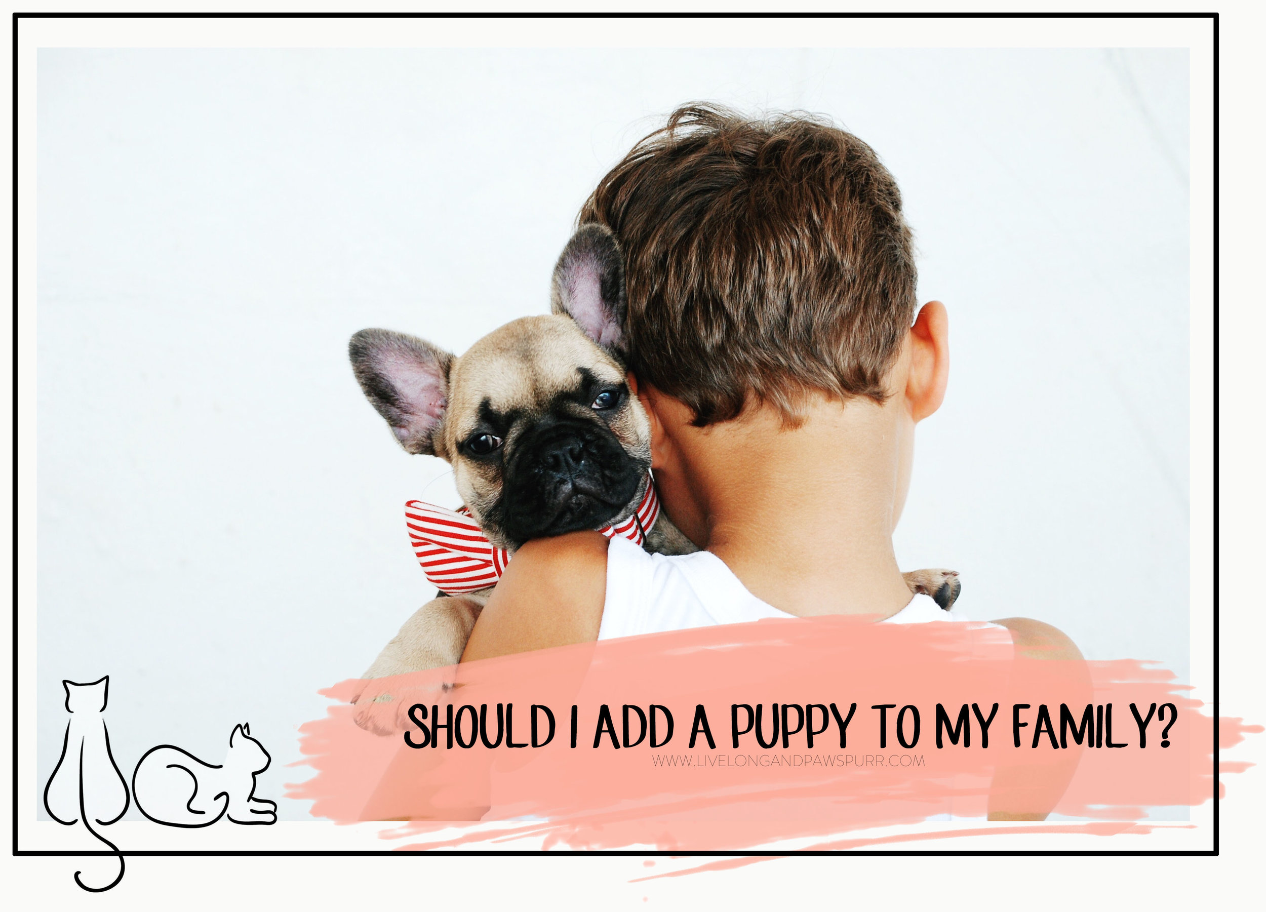 adding a puppy to the family #puppyadoption #puppy
