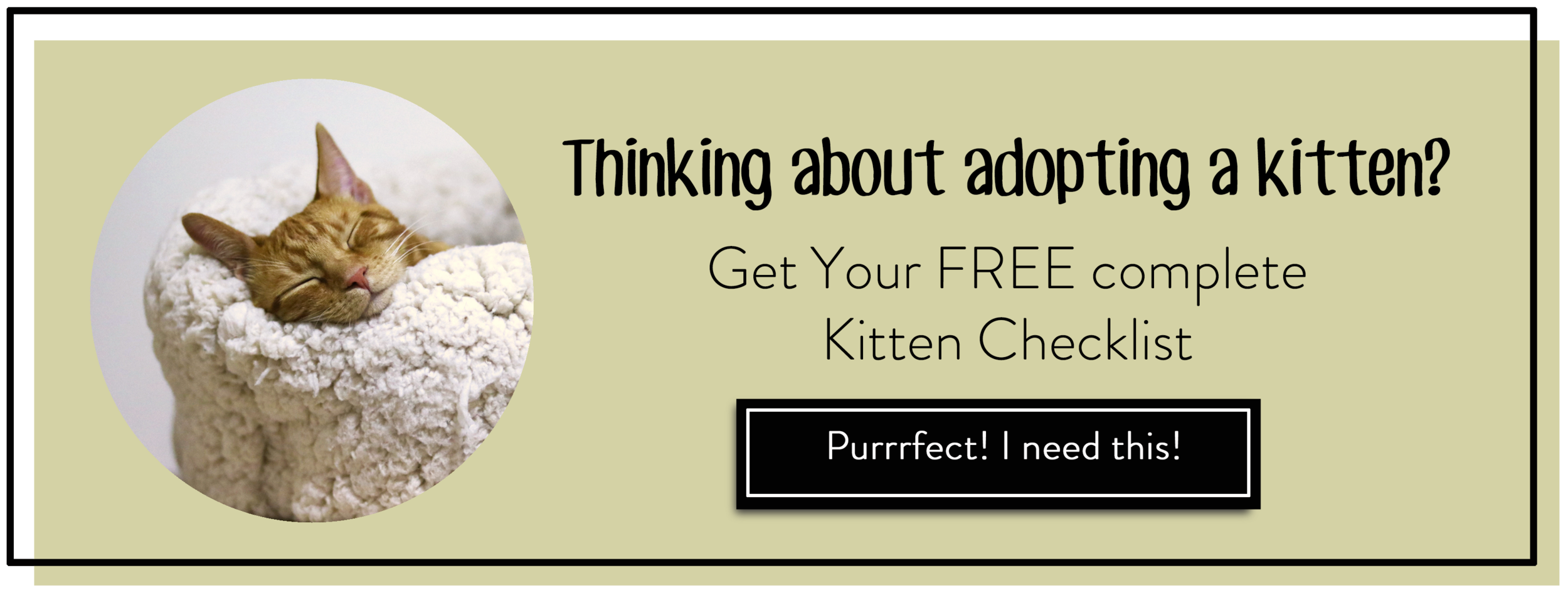 new kitten #kittenadoption #kitty