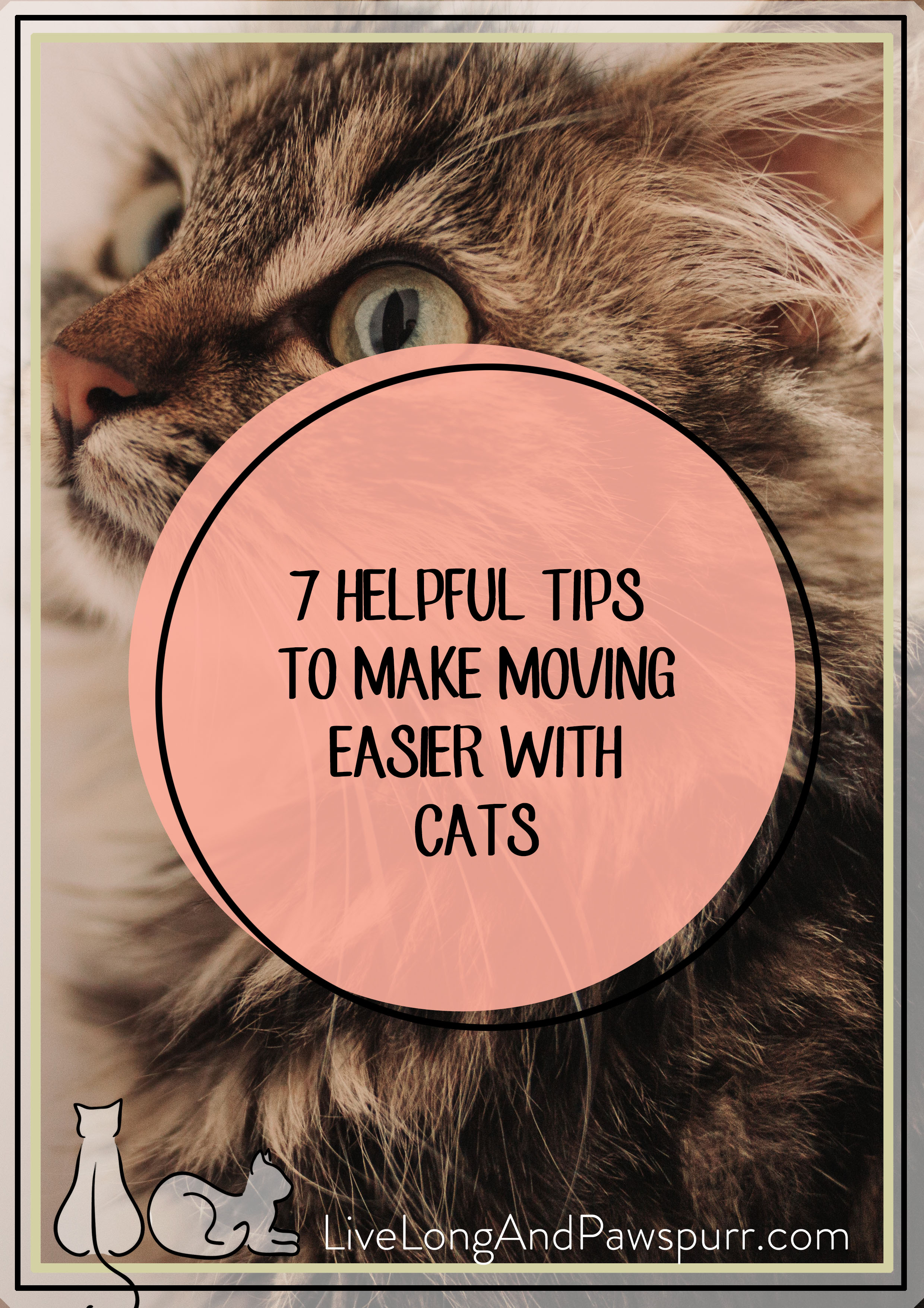 MOVING WITH CATS PIN1.jpg