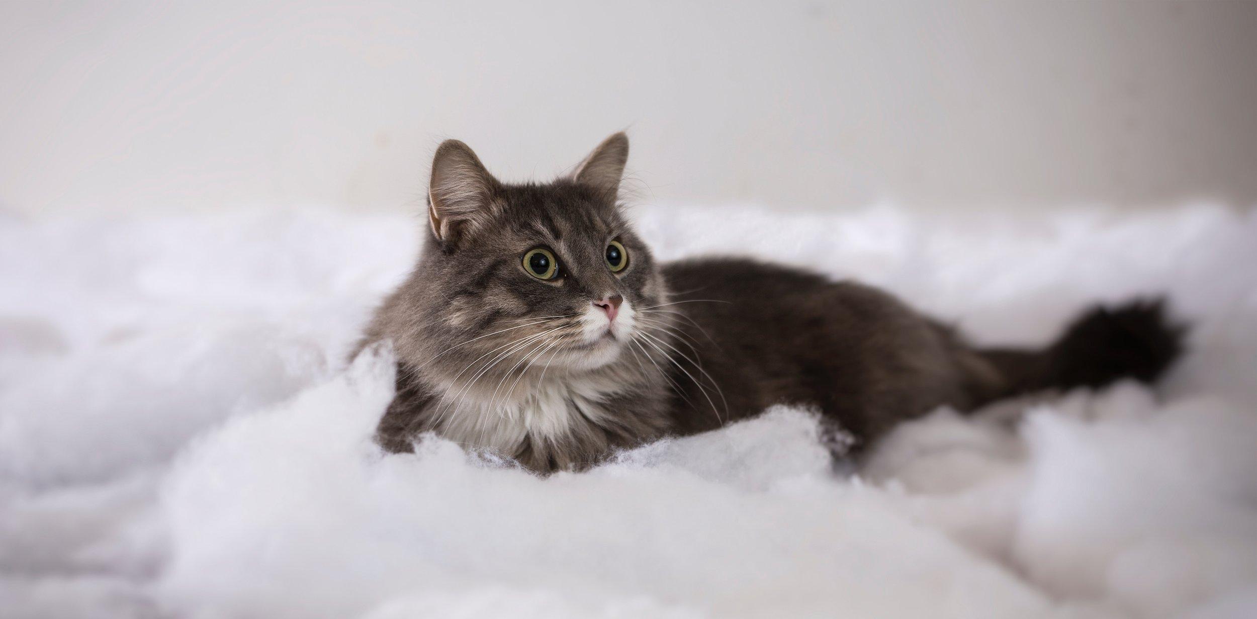 KITTENS cats #cutecats #catadvice
