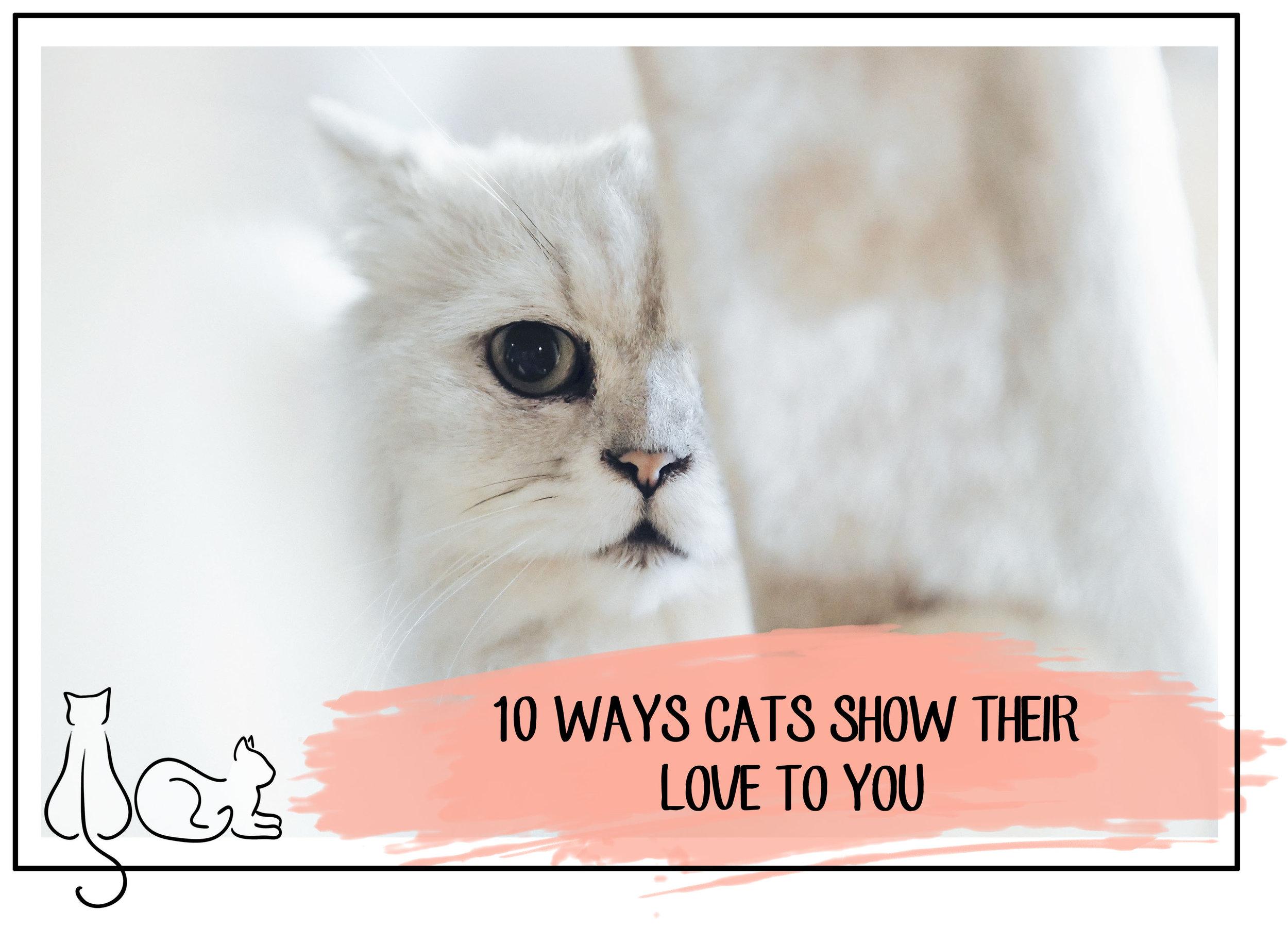 CATS SHOW THEIR LOVE.JPG