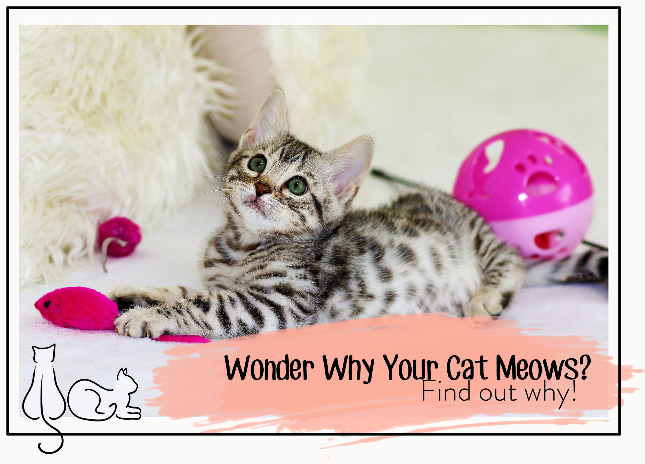 meow header.jpg