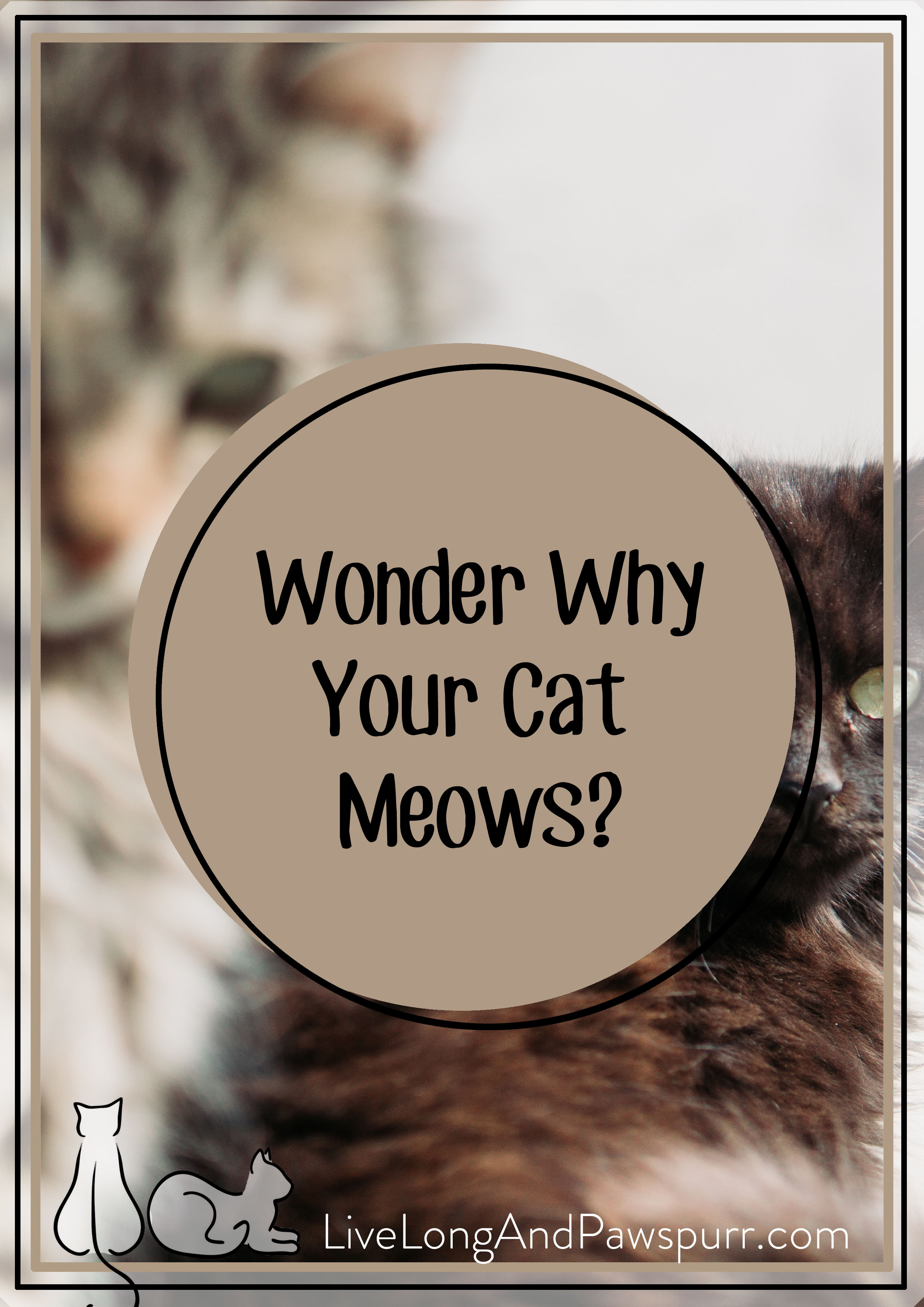 Meowing Cats.jpg