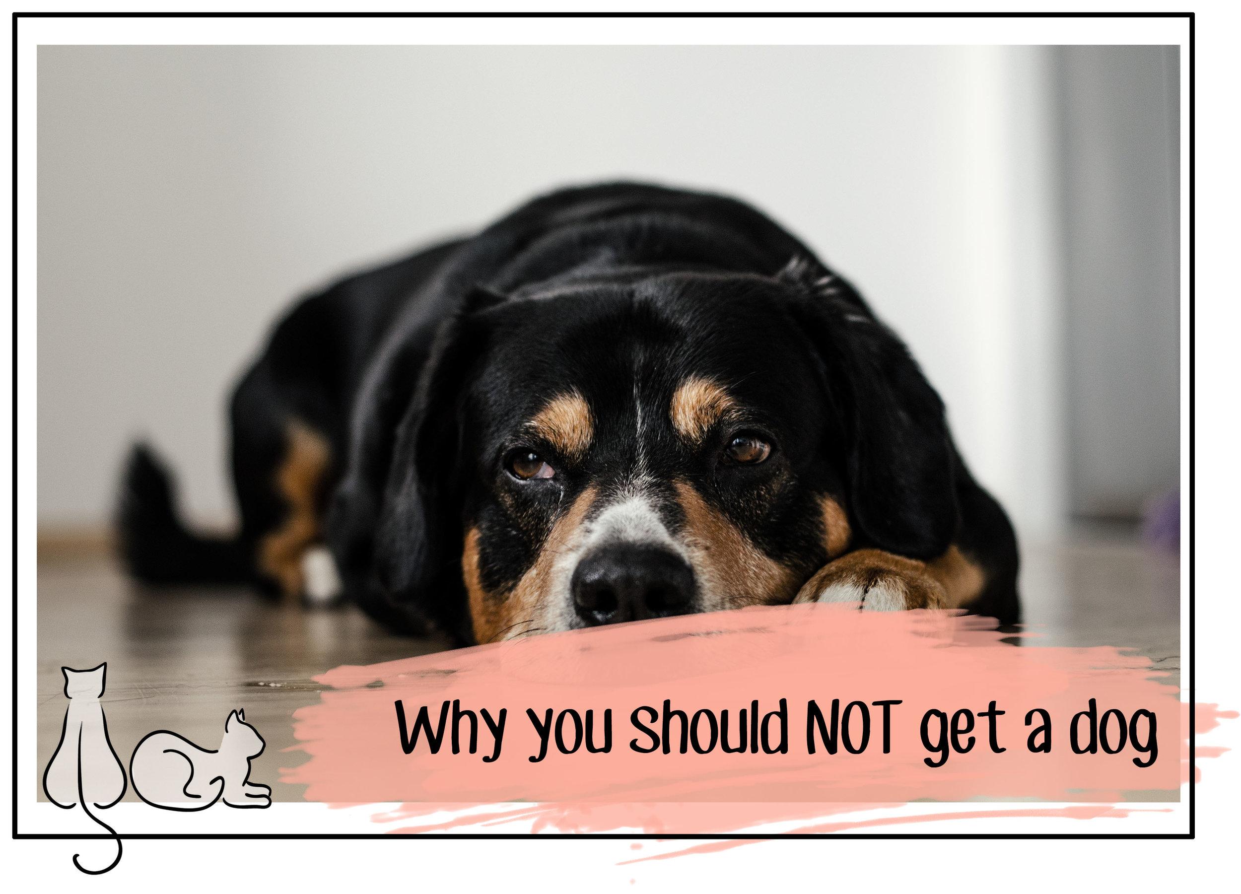 not adopt a dog header.jpg