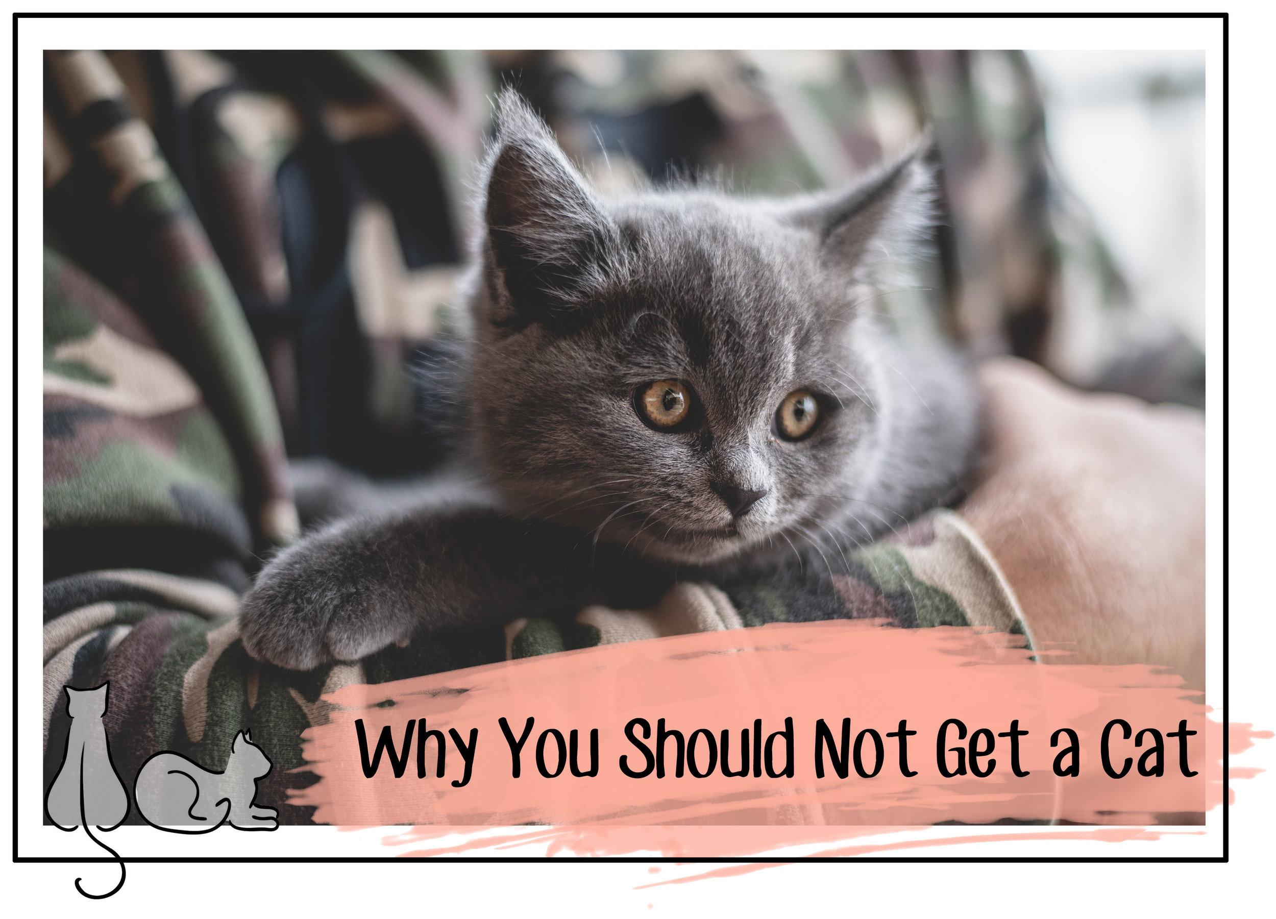 do not get a cat #catadoption