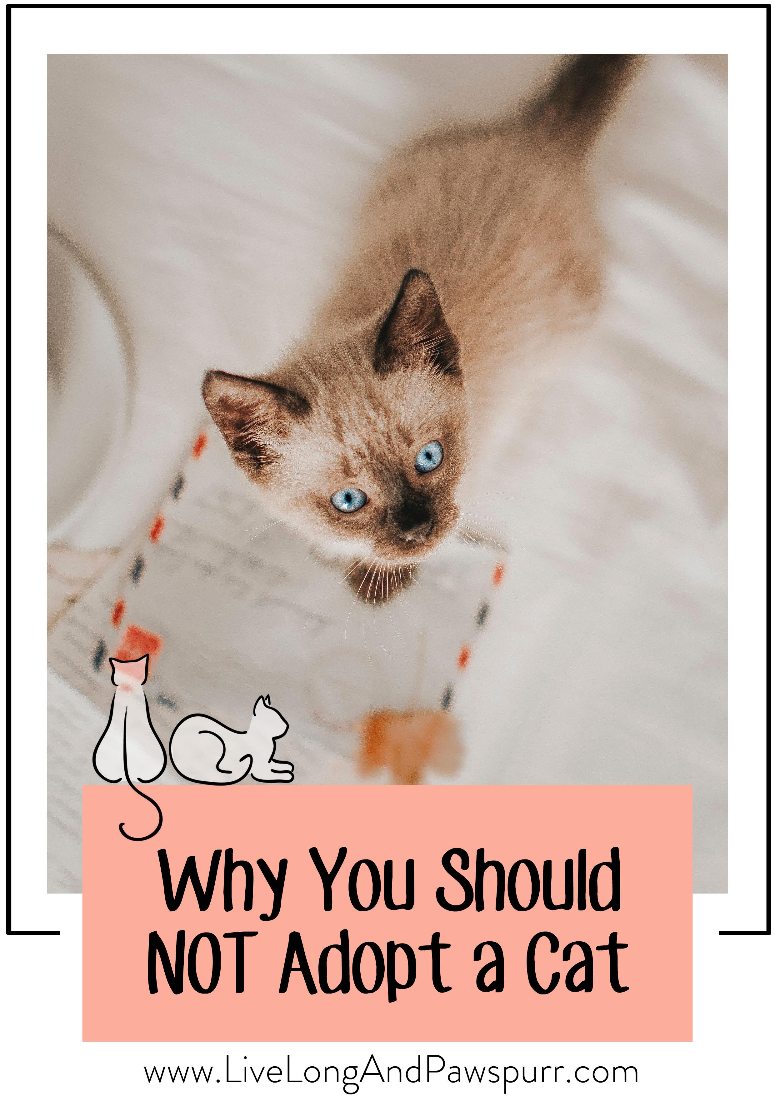 no cat pin 1.jpg