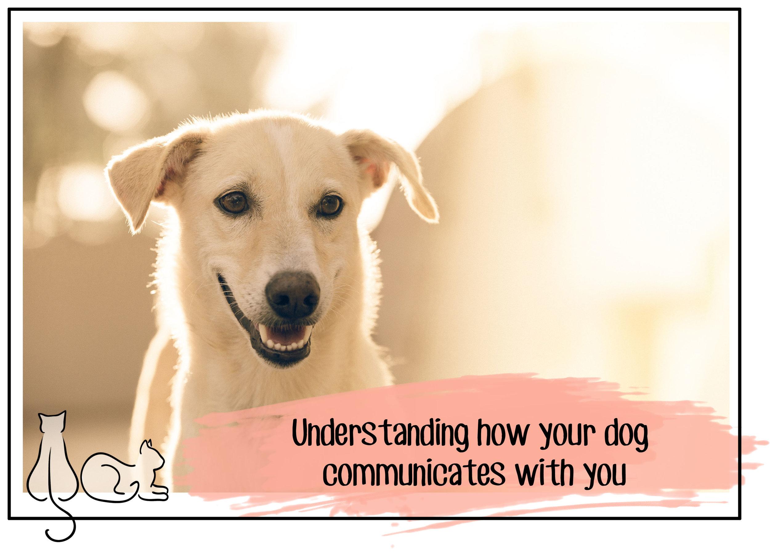 communication header.jpg