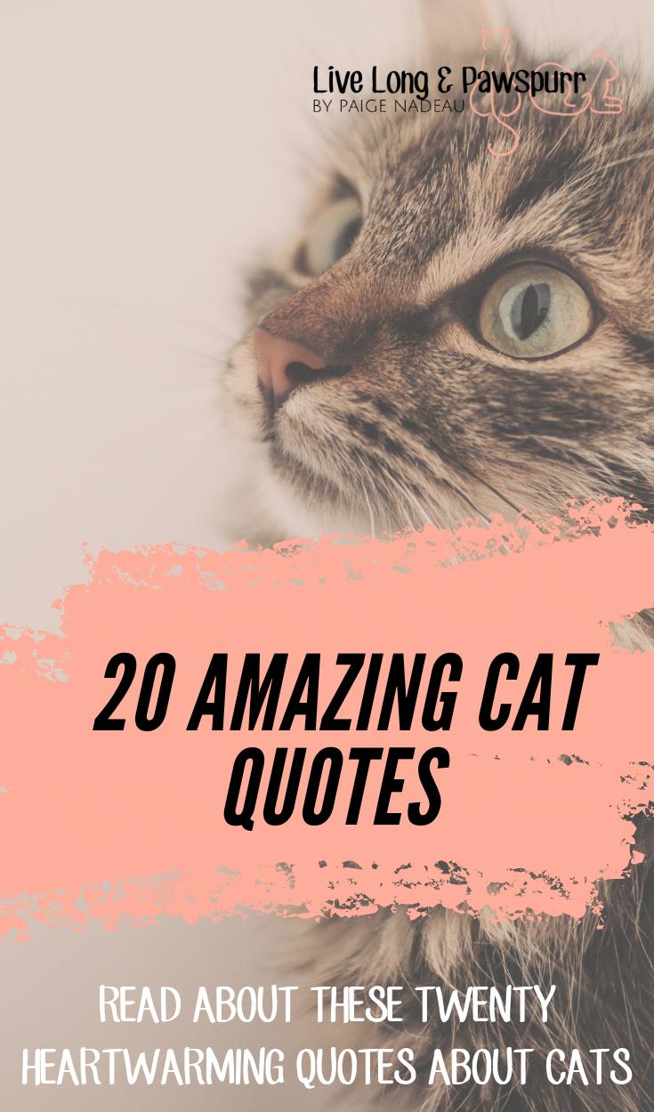 cat quotes #catquotes